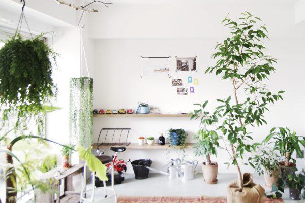 WORKS 29「緑を浴びて暮らす」中区・マンション