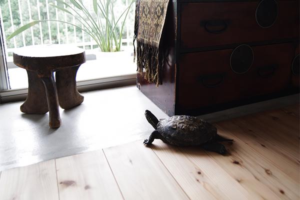 WORKS 13「カメと二胡と土間」名古屋市名東区・マンションリノベーション