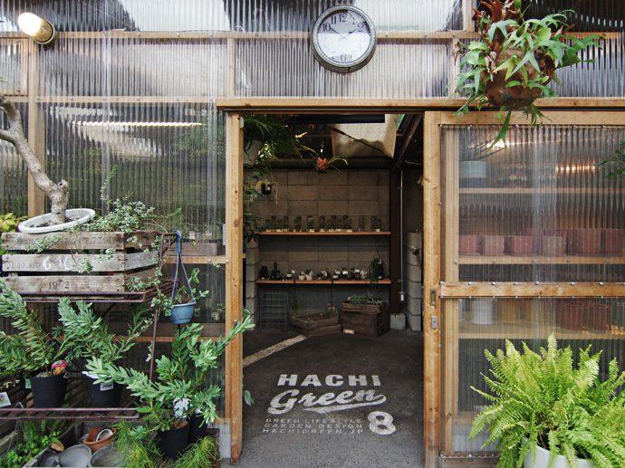 【8LOG】水耕栽培のサボテン