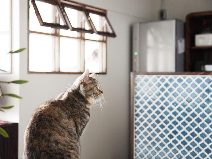 【名古屋市昭和区I様邸】猫と暮らすマンションインテリア