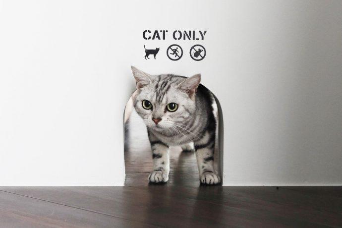 【インテリアのアイデア集】猫穴にキャットウォーク。猫とおしゃれに暮らす住まいのつくり方
