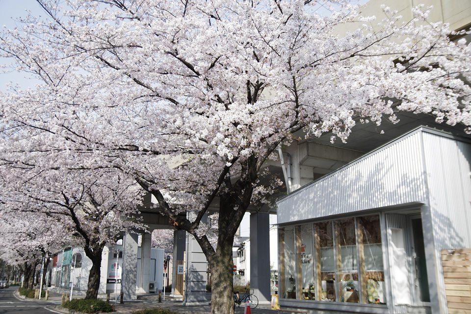SAKUMACHI商店街の見学会+セミナー