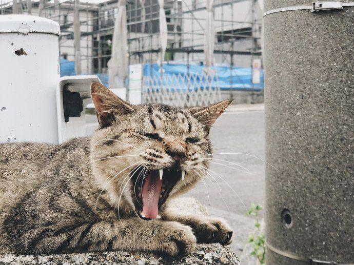 【8LOG】現場猫